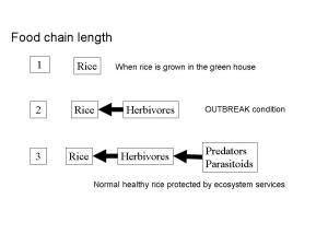 Food chain lengths – Systems with chain length 3 have strong ecosystem services. Outbreaks occur when chain length approaches 2.