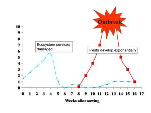 Pests that invade crops with reduced ecosystem services, tend to multiply exponentially to outbreak proportions.