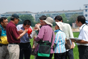 Dr. Heong is showing participants the aquatic samples collected from the rice field.