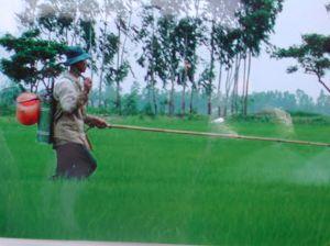Farmer spraying for leaffolder